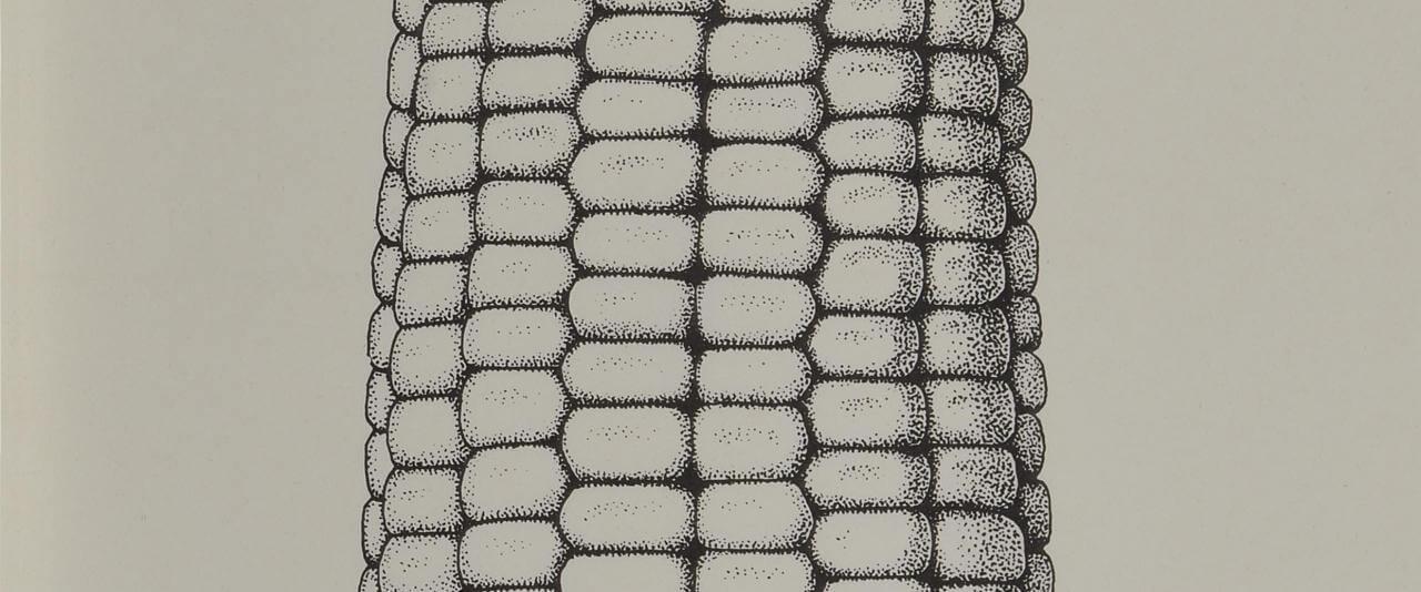 Bomba de maíz | Marcos Kurtycz. Contra el estado de guerra, un arte de acción total | Museo Amparo, Puebla